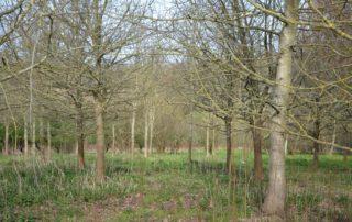 Stogumber Woods Trees